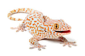 Gecko biomimetic directional adhesion micro-structures for wet skin product application